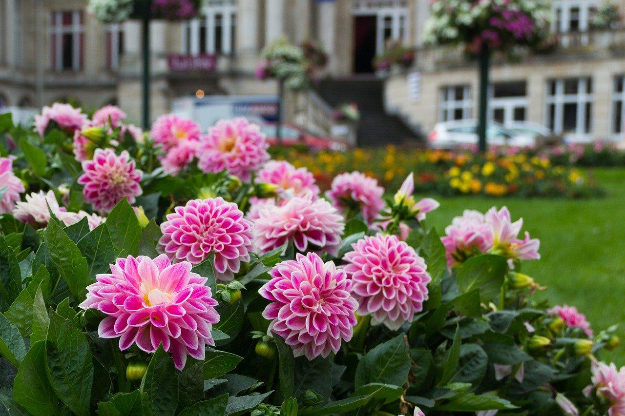 Tips voor tuinonderhoud