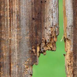 Hoe je houtwormen moet verwijderen